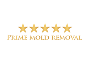Mold removal Brooklyn