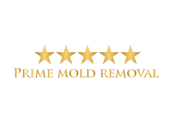 Prime mold removal long island