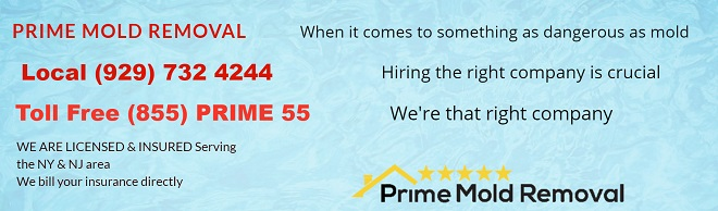 New prime mold removal banner 123